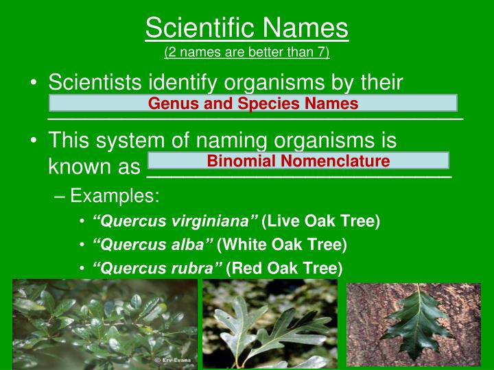 Scientific Names