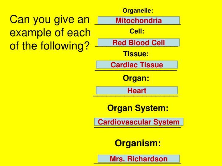 Organelle: