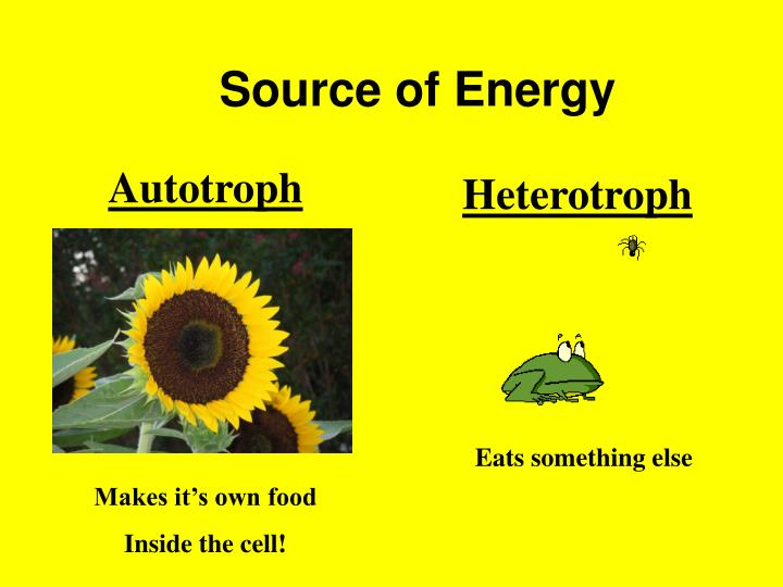 Source of Energy