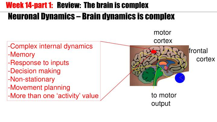 Neuronal dynamics brain dynamics is complex1