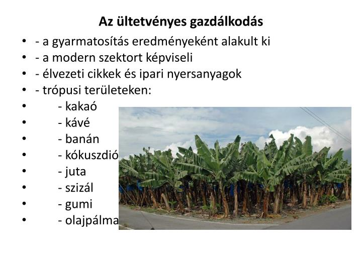 Az ültetvényes