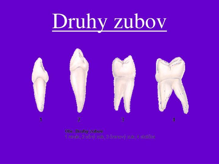 Druhy zubov