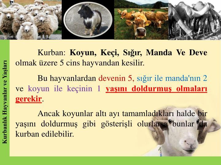 Kurban: