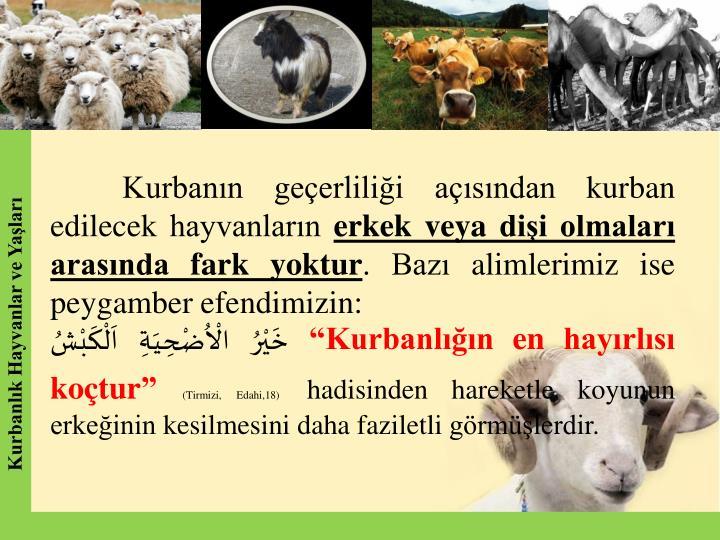 Kurbann geerlilii asndan kurban edilecek hayvanlarn