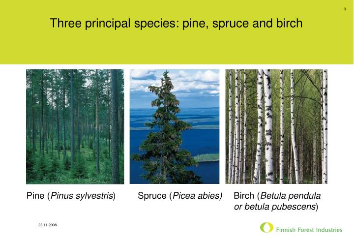 Three principal species pine spruce and birch