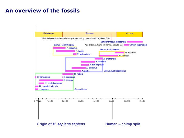 An overview of the fossils