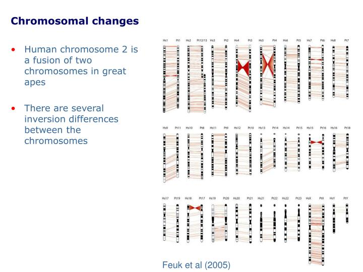 Chromosomal changes