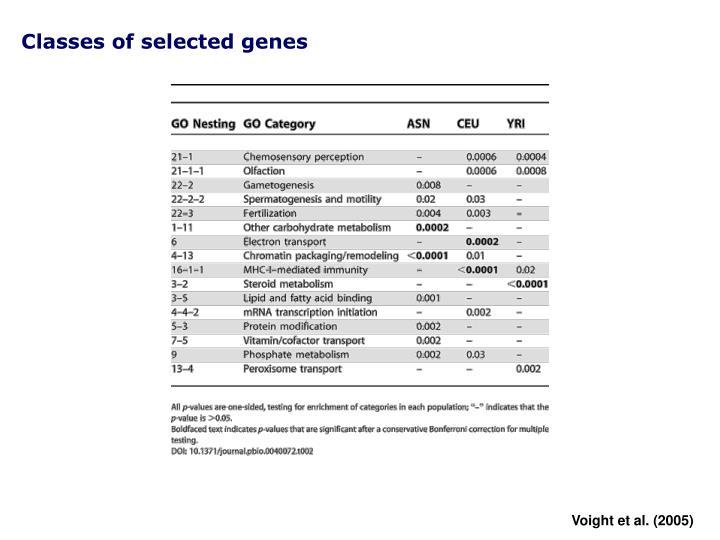 Classes of selected genes