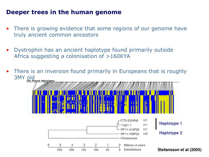 Deeper trees in the human genome