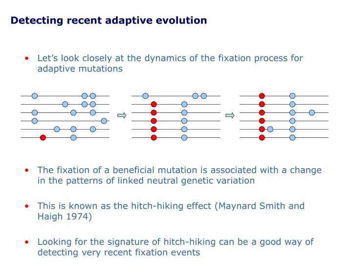 Detecting recent adaptive evolution