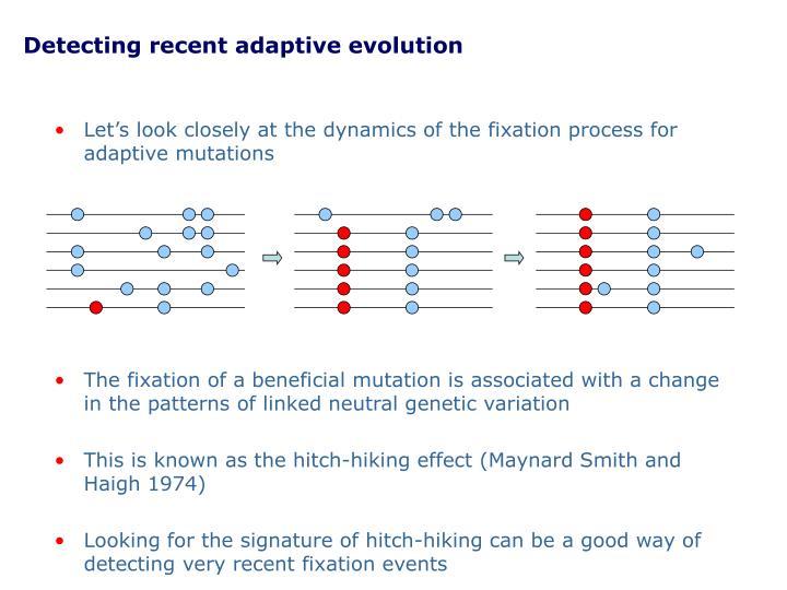 Detecting recent adaptive evolution
