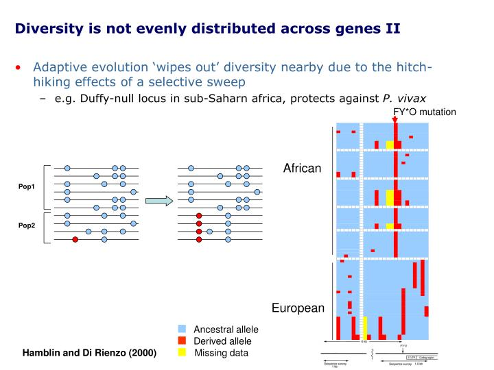 Diversity is not evenly distributed across genes II