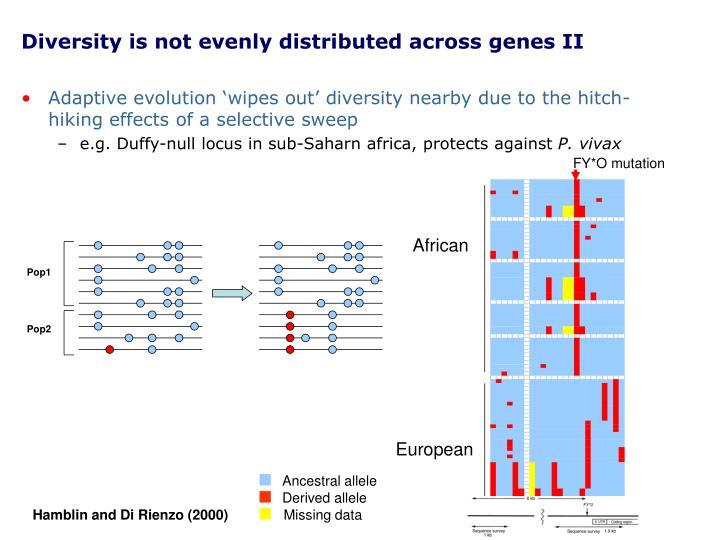 Diversity is not evenly distributed across genes II