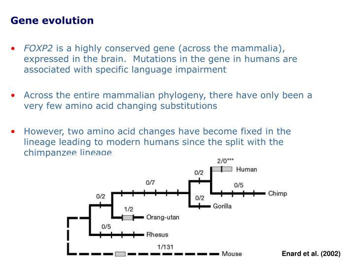Gene evolution