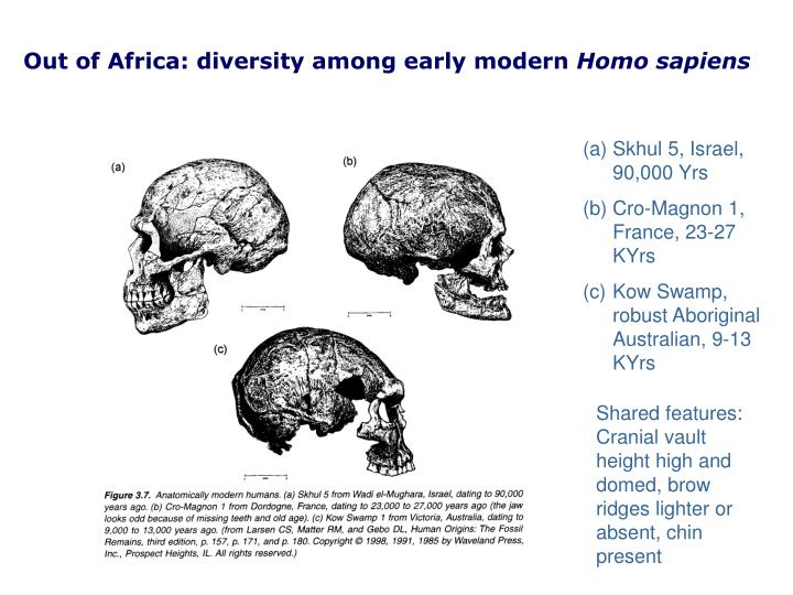 Out of Africa: diversity among early modern