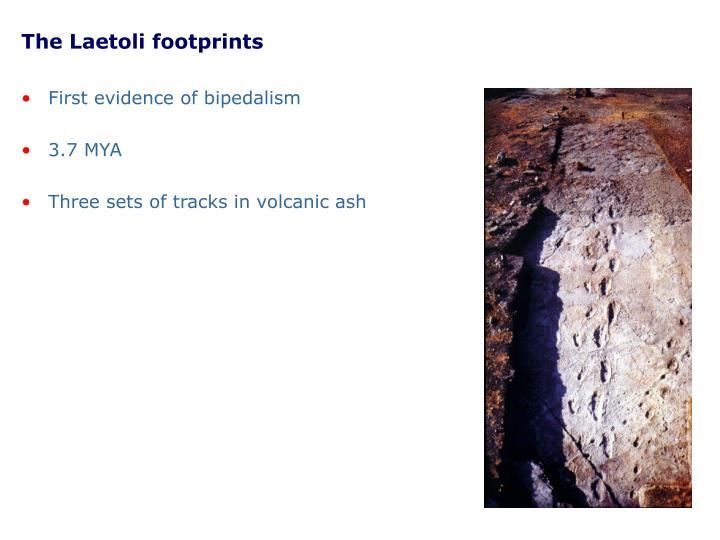 The Laetoli footprints