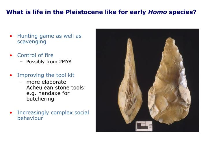 What is life in the Pleistocene like for early
