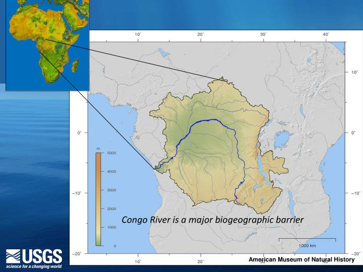 Congo River is a major biogeographic barrier