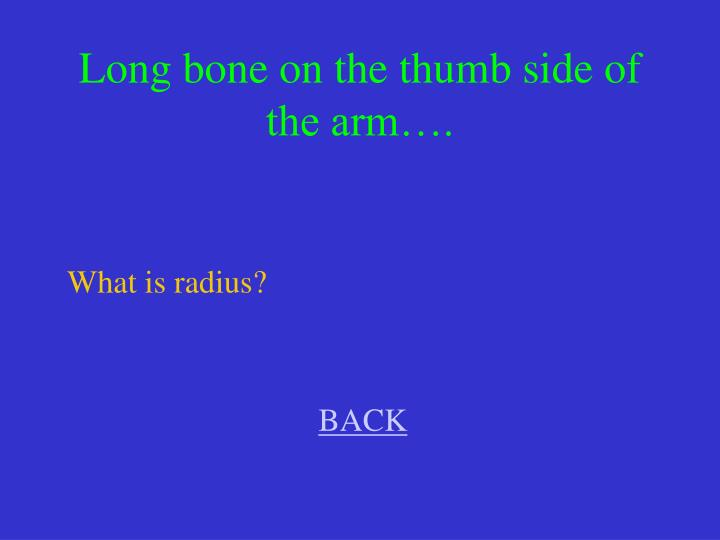 Long bone on the thumb side of the arm….