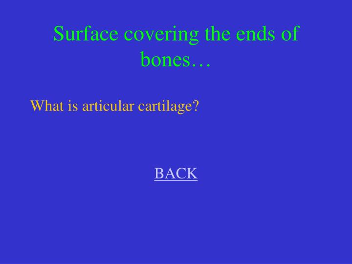 Surface covering the ends of bones…