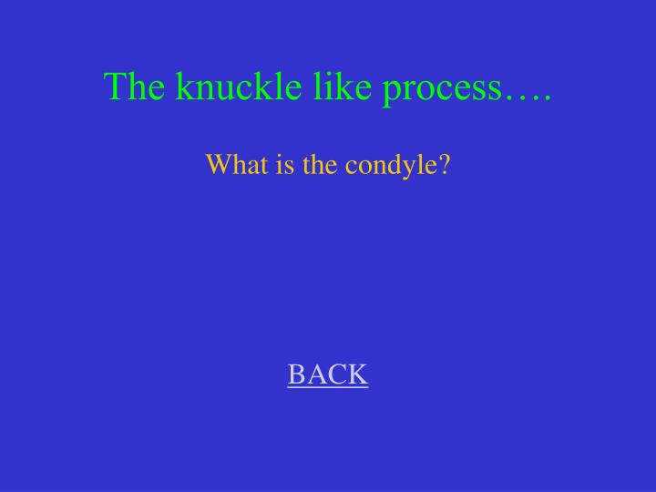The knuckle like process….