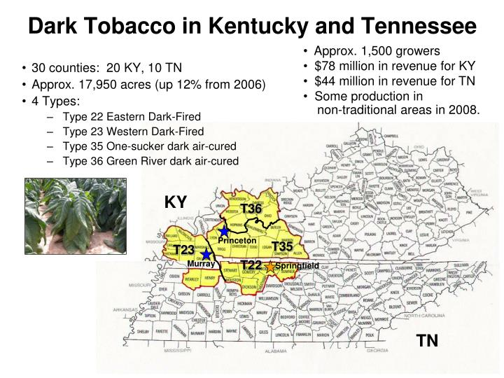 Dark Tobacco in Kentucky and Tennessee