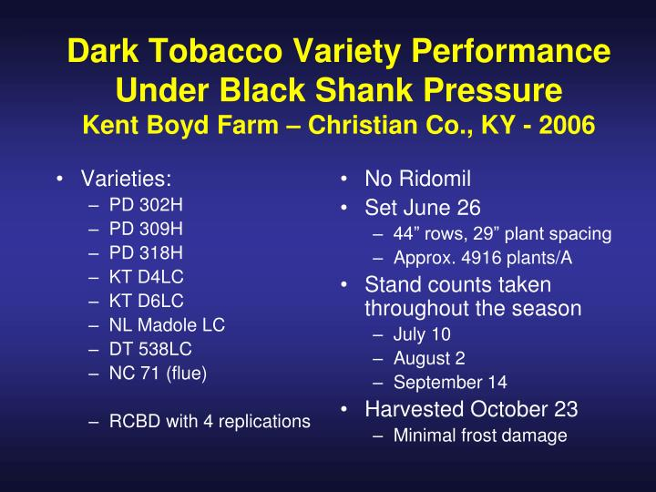Dark Tobacco Variety Performance Under Black Shank Pressure