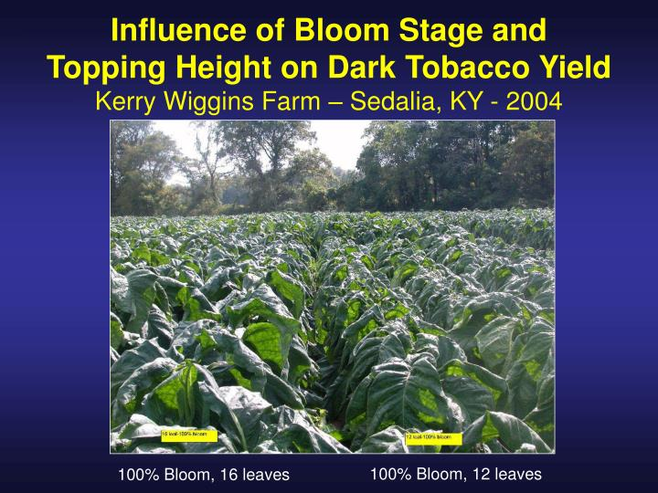 Influence of Bloom Stage and