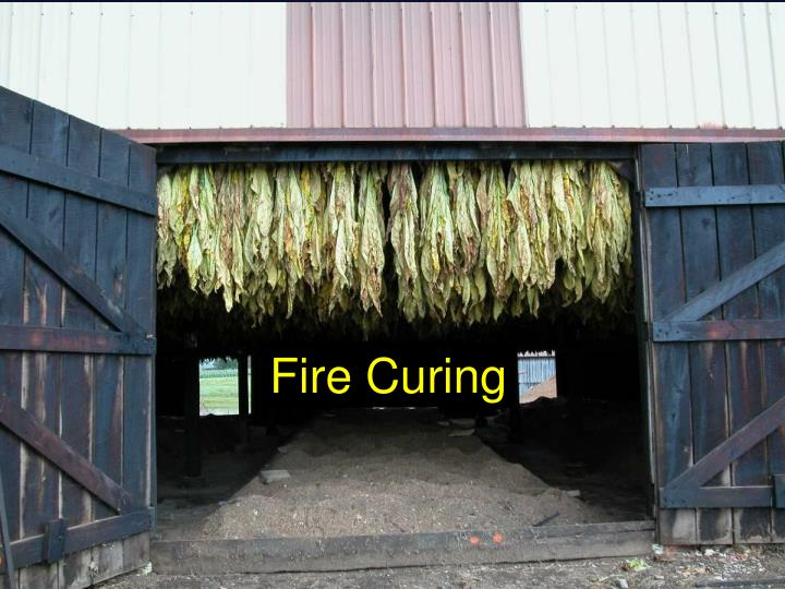 Fire Curing