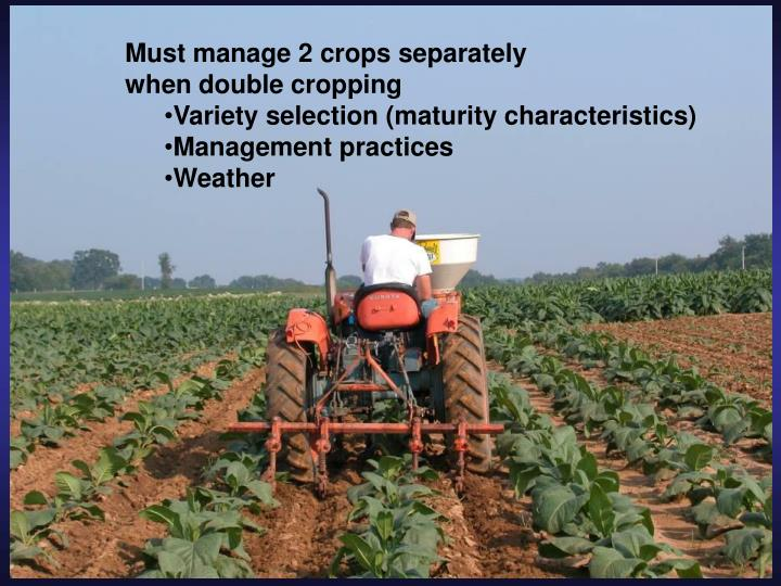 Must manage 2 crops separately