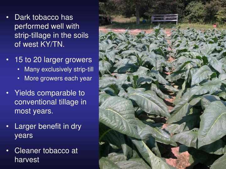 Dark tobacco has         performed well with strip-tillage in the soils of west KY/TN.