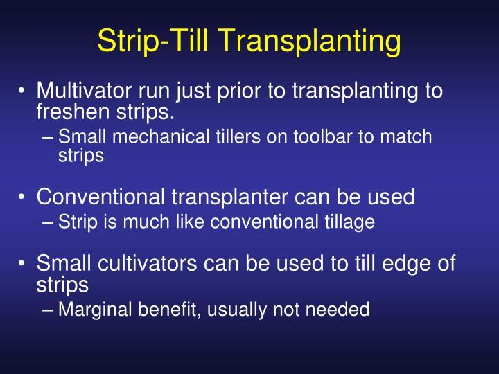 Strip-Till Transplanting