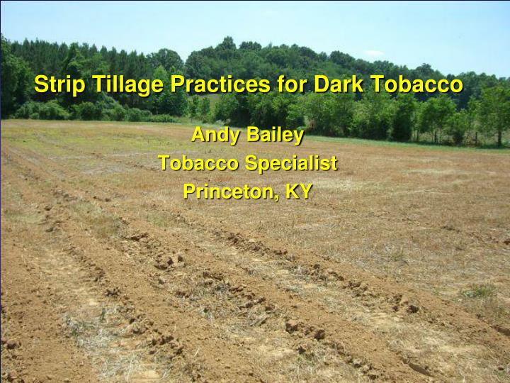 Strip Tillage Practices for Dark Tobacco