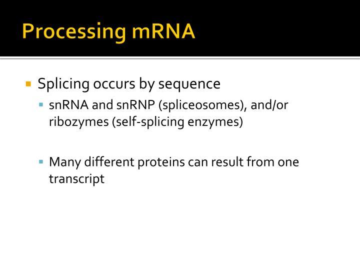 Processing mRNA