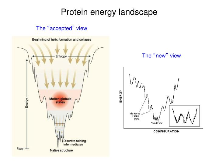 Protein energy landscape