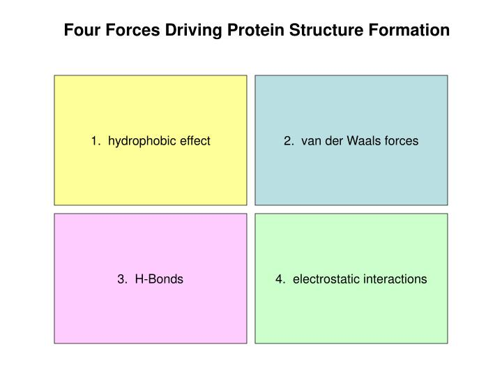 Four Forces Driving Protein Structure Formation