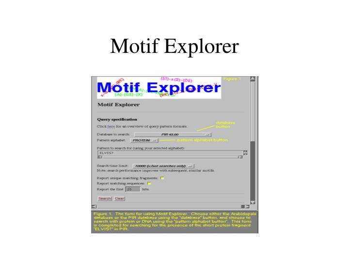 Motif Explorer
