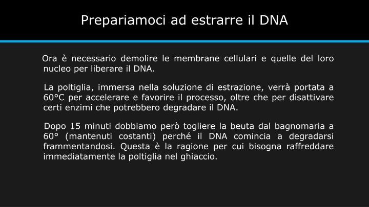 Prepariamoci ad estrarre il DNA