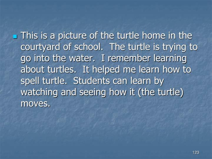 This is a picture of the turtle home in the courtyard of school.  The turtle is trying to go into the water.  I remember learning about turtles.  It helped me learn how to spell turtle.  Students can learn by watching and seeing how it (the turtle) moves.