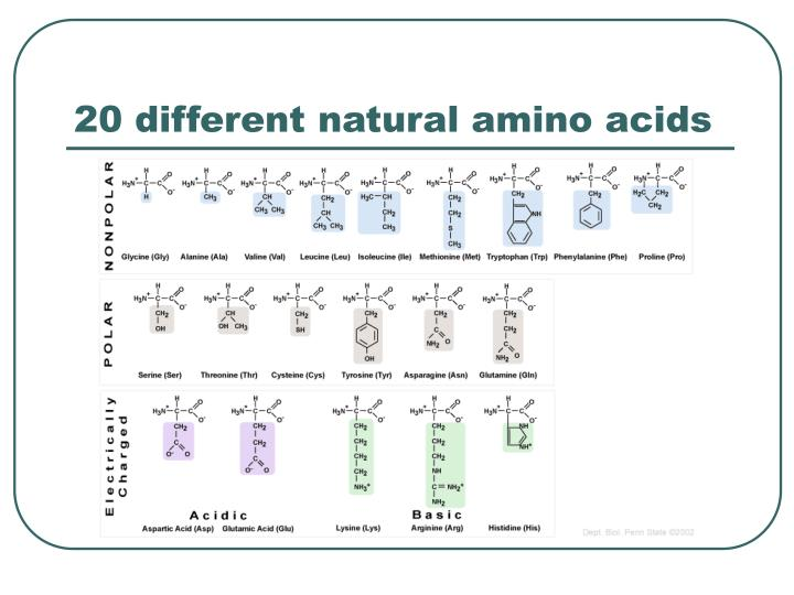 20 different natural amino acids
