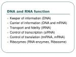dna and rna function