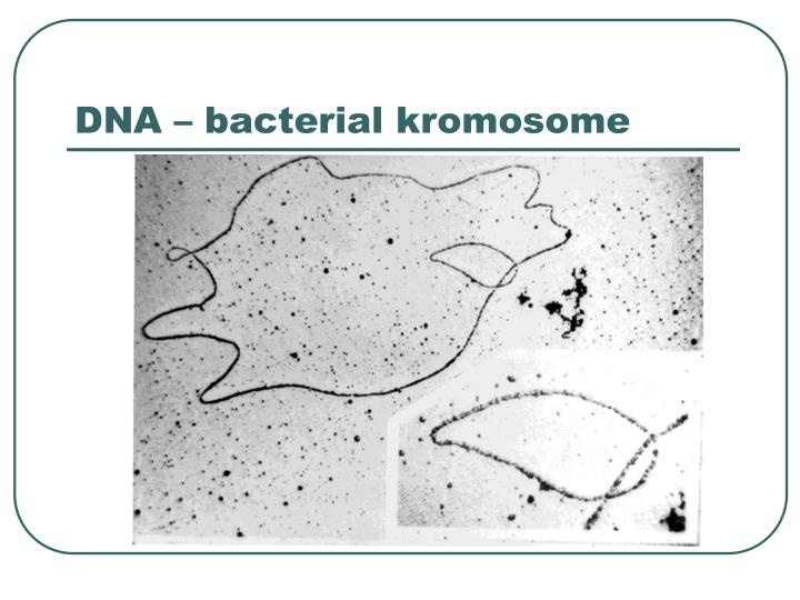 DNA – bacterial kromosome