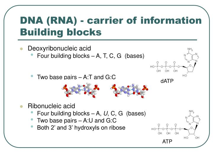 DNA (RNA) - carrier of information