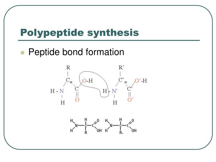 Polypeptide synthesis