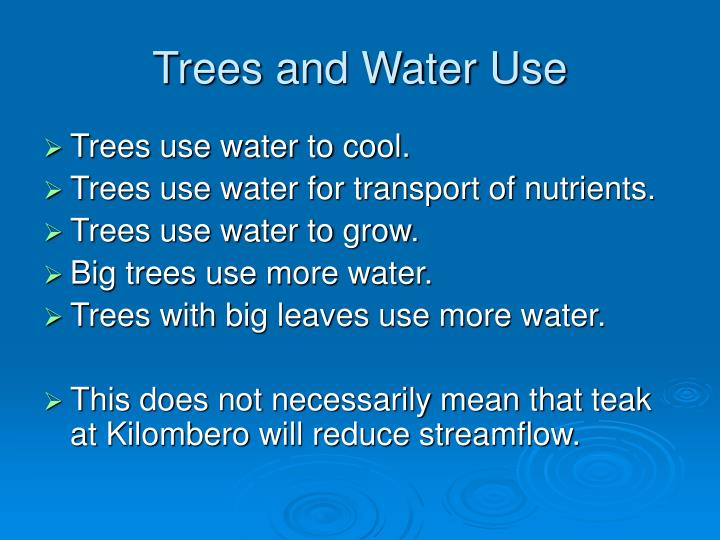 Trees and water use