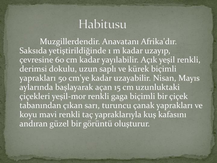 Habitusu