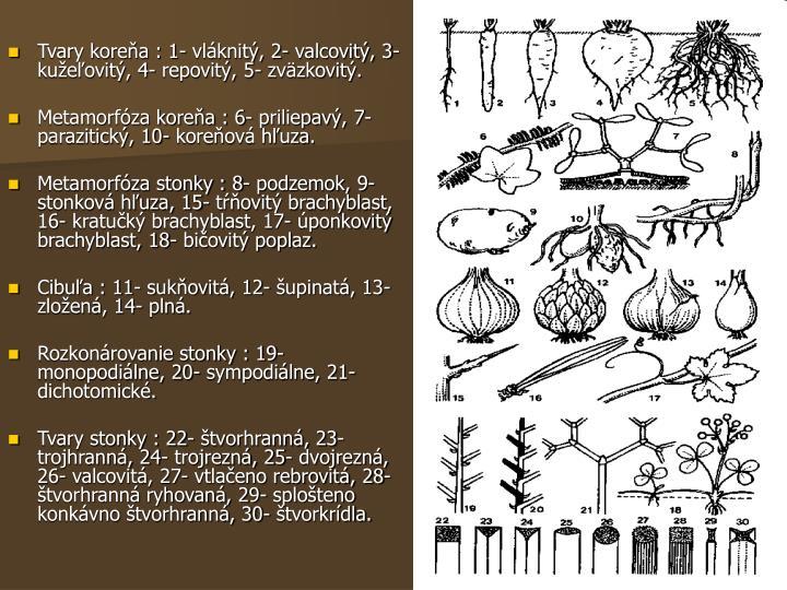Tvary koreňa : 1- vláknitý, 2- valcovitý, 3- kužeľovitý, 4- repovitý, 5- zväzkovitý.