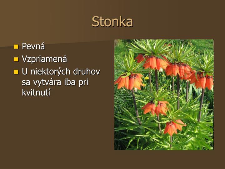 Stonka