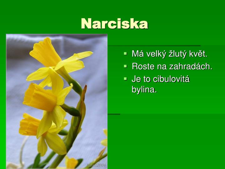 Narciska