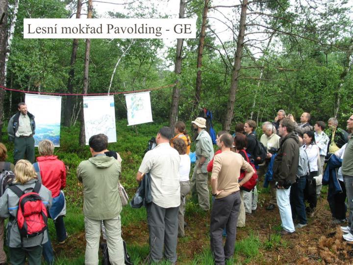 Lesní mokřad Pavolding - GE